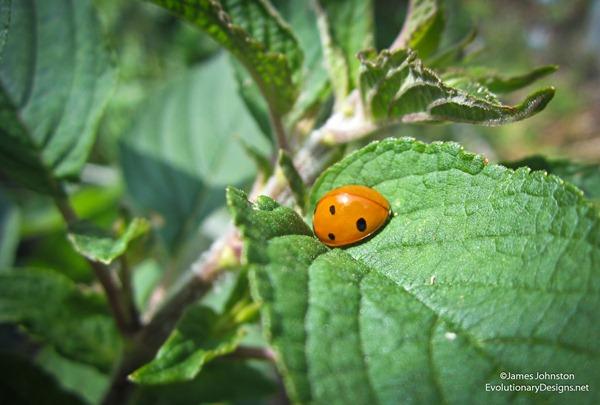 ladybug-before-1_thumb.jpg